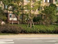 伊美,一楼带地下内复式,有180平,小区新环境,多层房源住家
